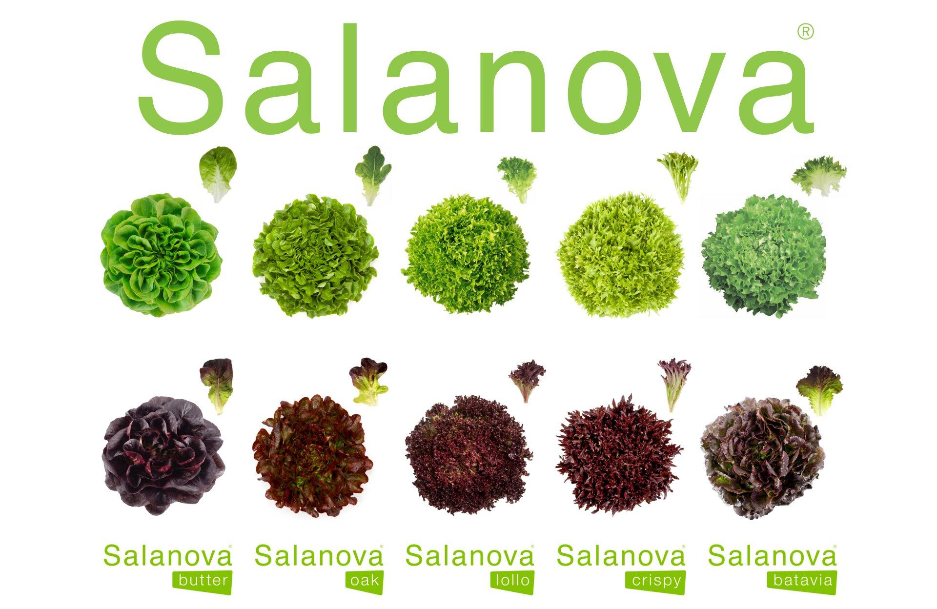 salanova